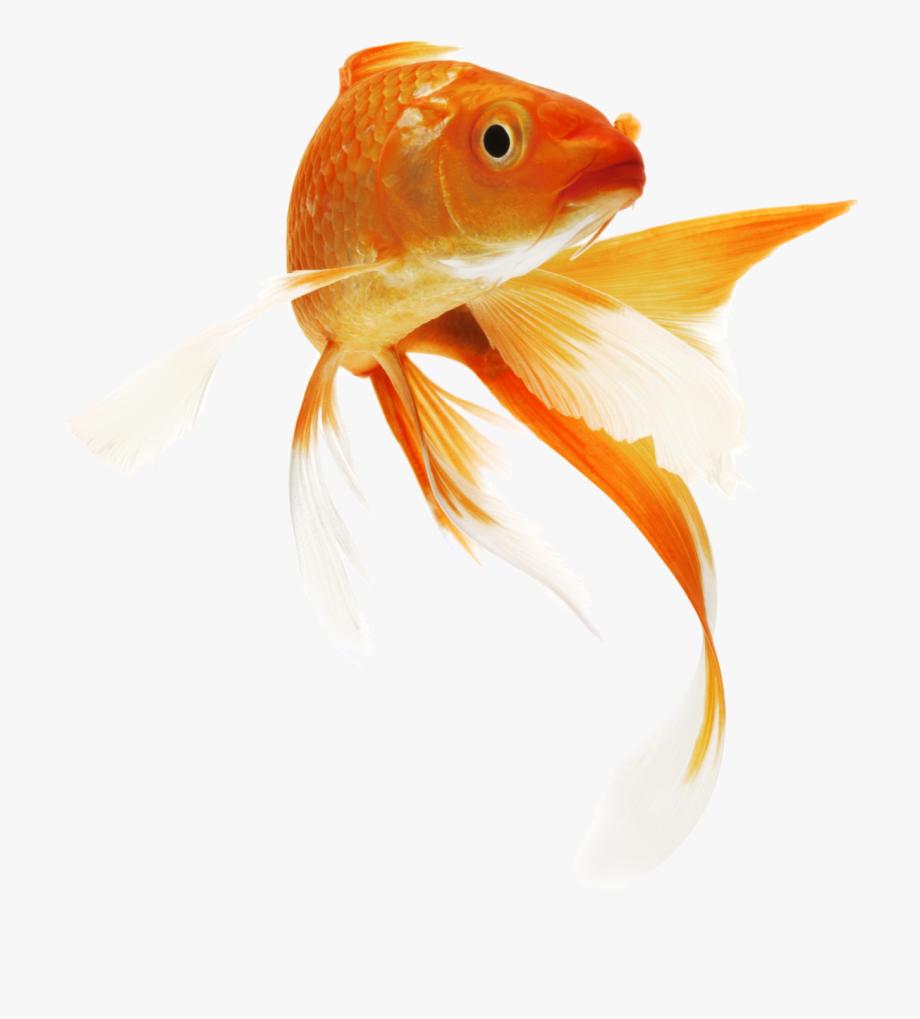 Clip library download fish. Goldfish clipart fisg