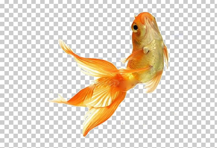 Stock photography tropical png. Goldfish clipart fish feeder