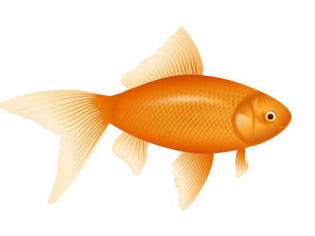 Free gold fish download. Goldfish clipart girly