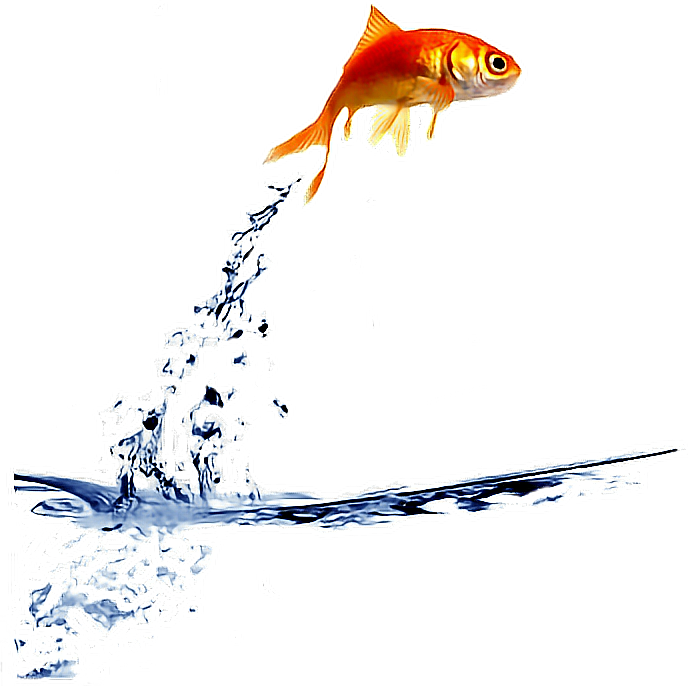 Ftestickers jump fishstickers. Goldfish clipart gold fish