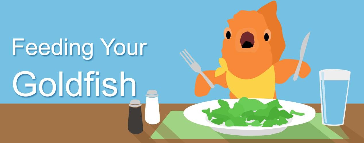 Goldfish clipart goldfish food. How often to feed