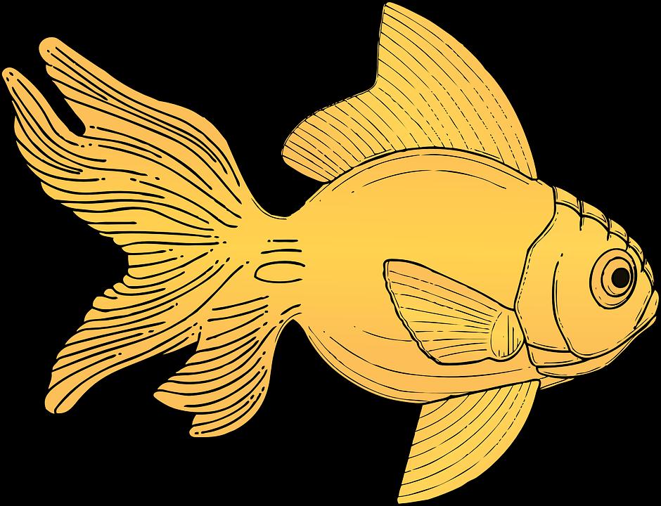 Goldfish goldfish food