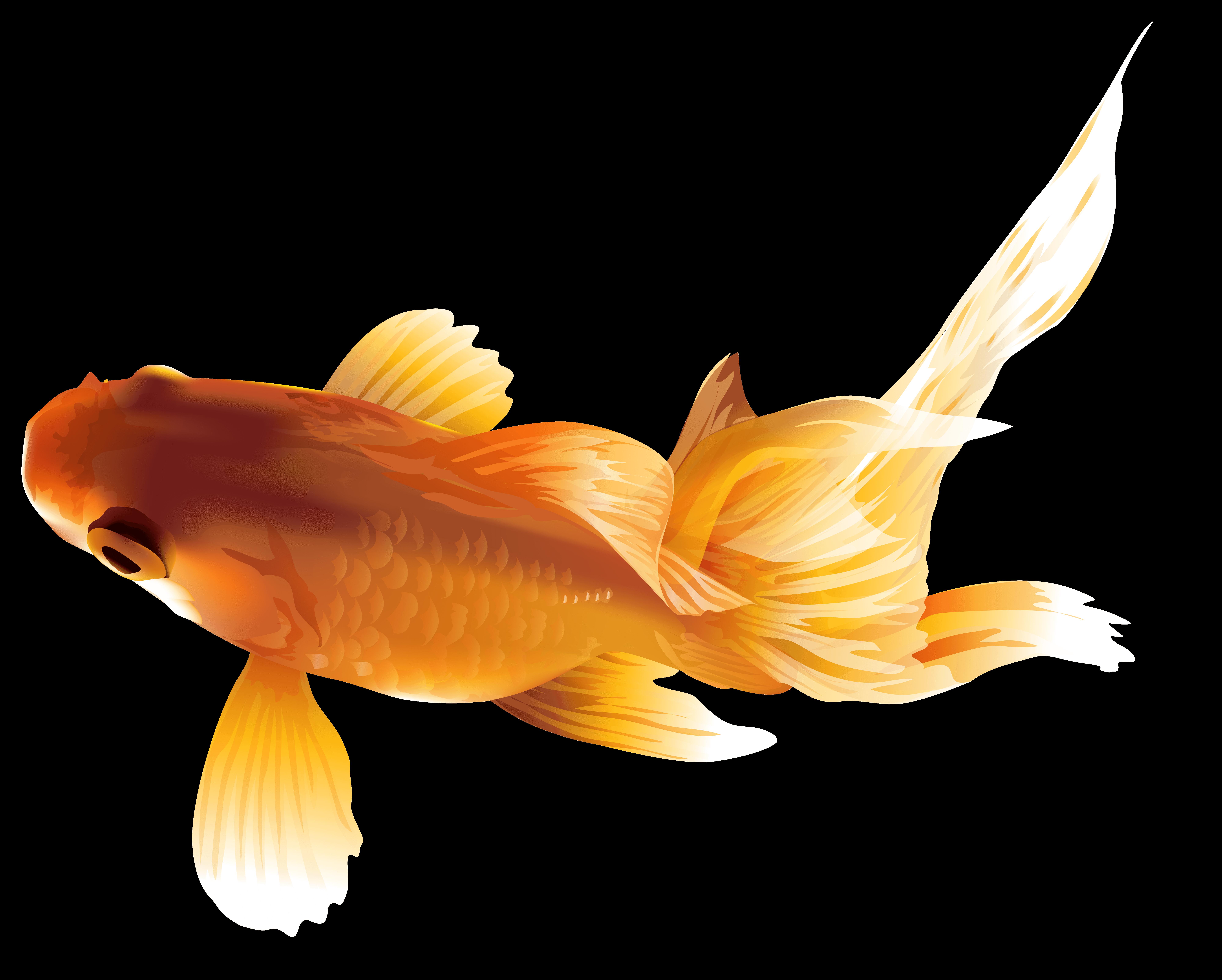 Cliparts zone . Goldfish clipart heart