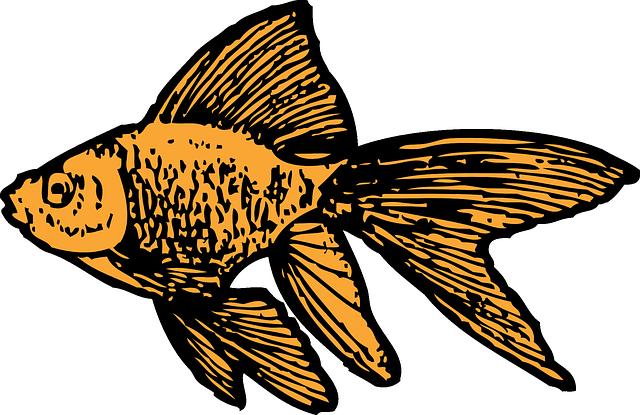 Goldfish clipart little fish. Water small cartoon tank