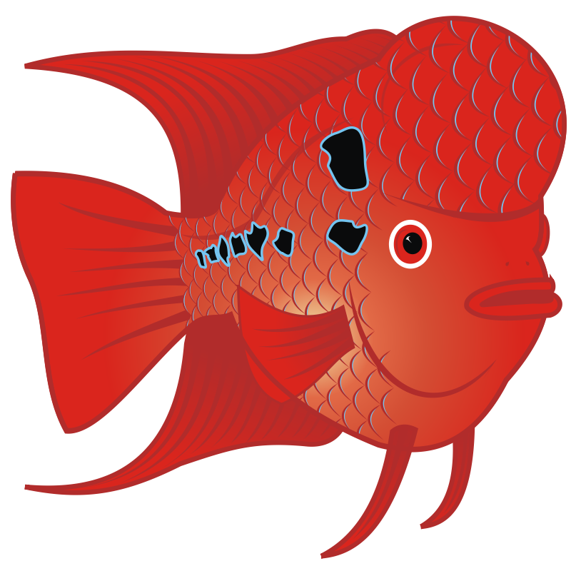 Clip art library . Goldfish clipart red