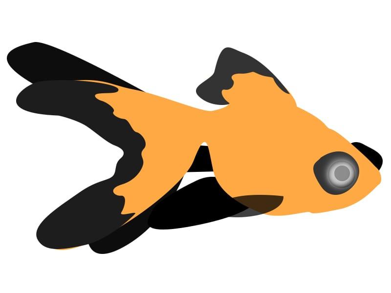 Goldfish clipart sick. X free clip art