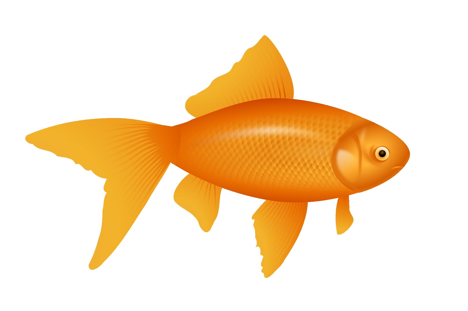Clipartist net clip art. Trout clipart golden trout