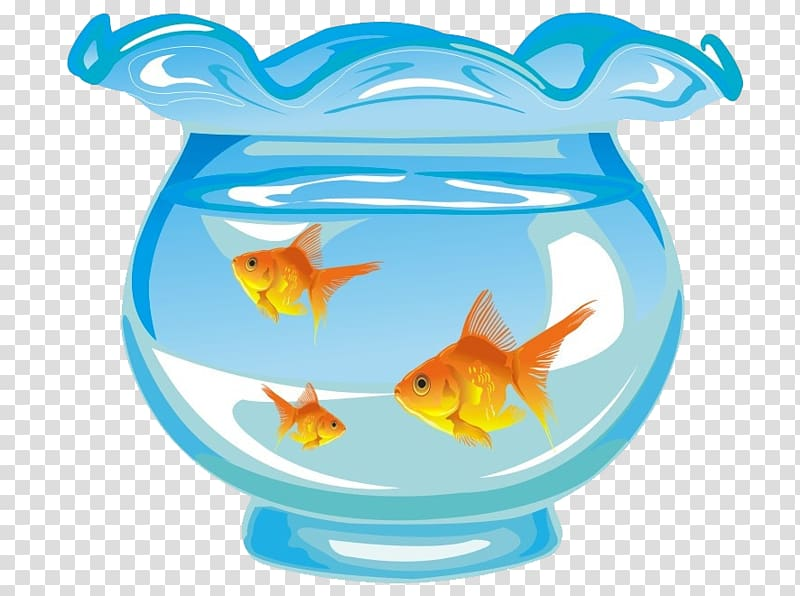 Aquarium fish tank transparent. Goldfish clipart three