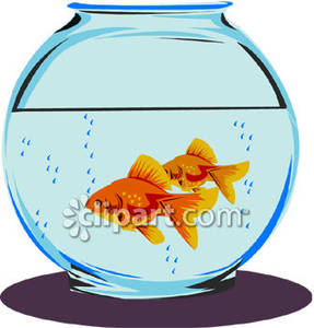 In a bowl royalty. Goldfish clipart two