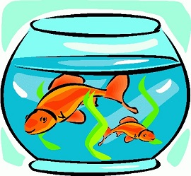 Free images gclipart com. Goldfish clipart two