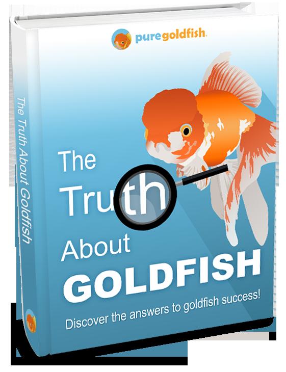 Goldfish clipart whitefish.  amazing names for