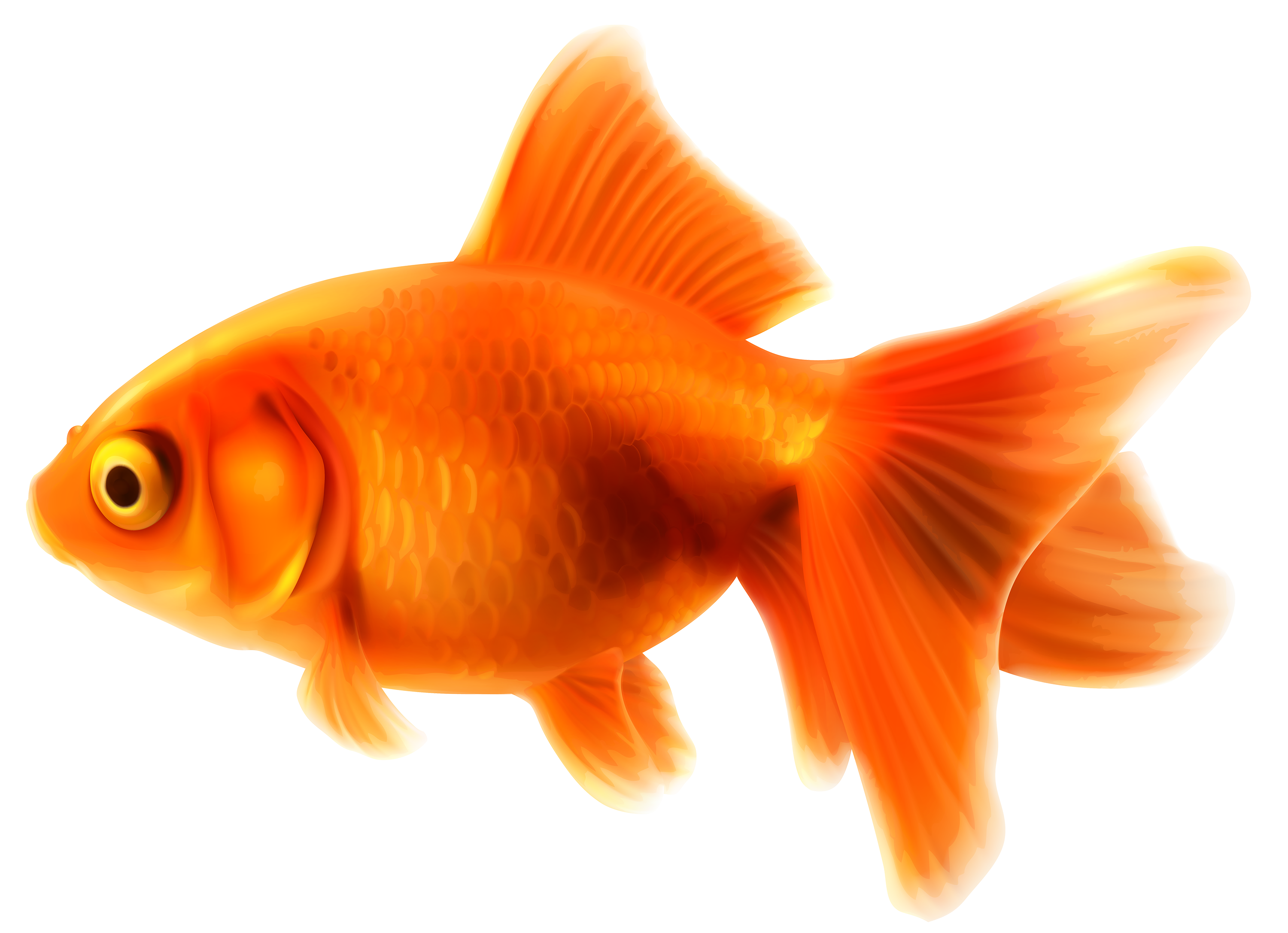 Pet clipart fish feeder. Goldfish png best web