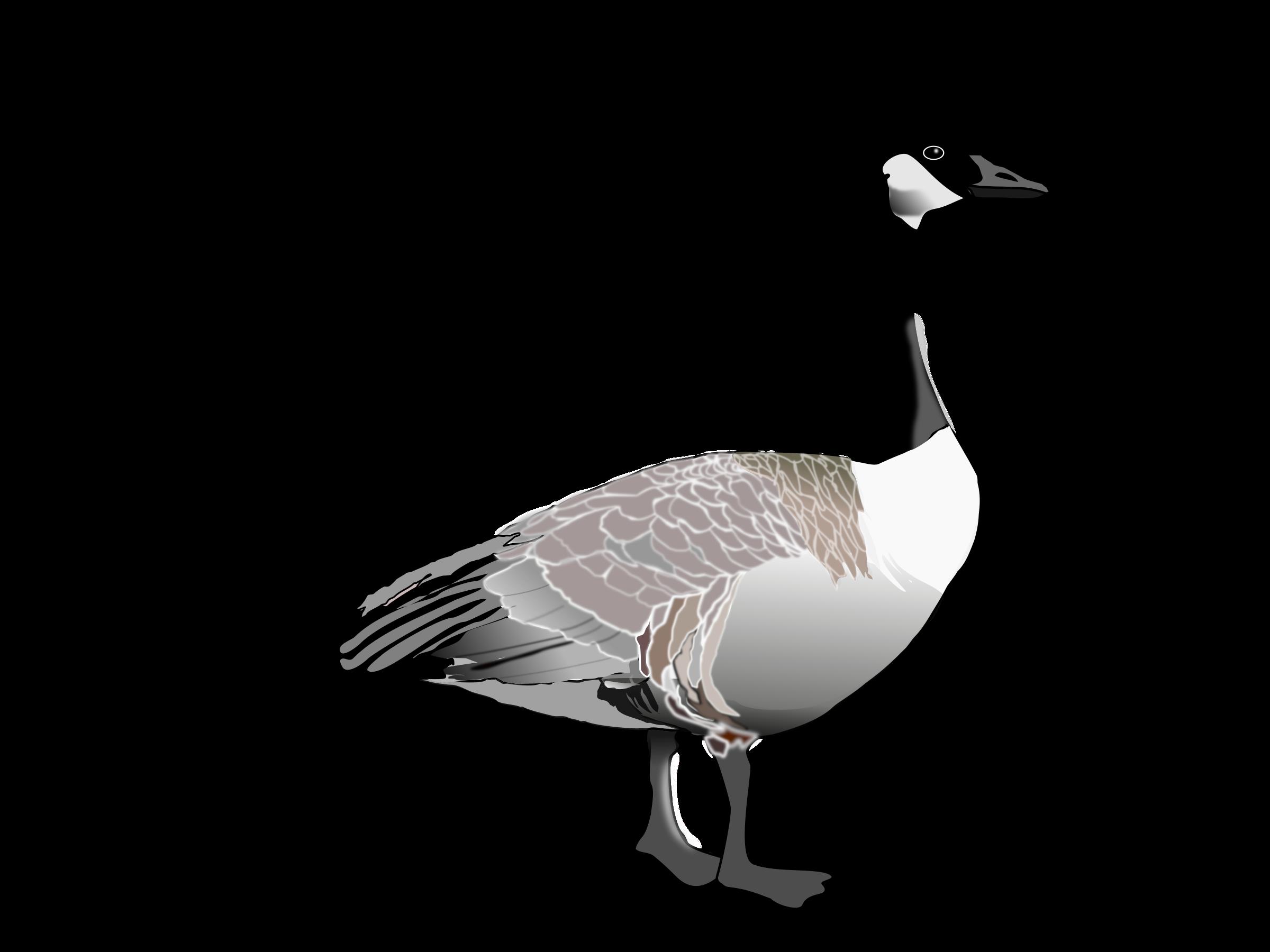 Goose clipart. Canadian big image png