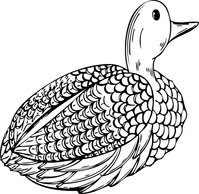Hunting clipart waterfowl hunting. Animals birds duck decoy