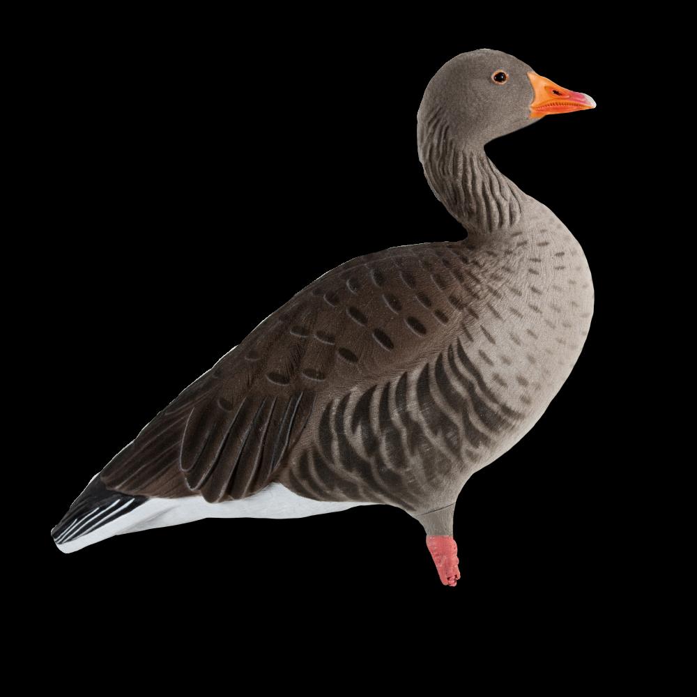 Hunter clipart goose hunting. Ghg greylag full body