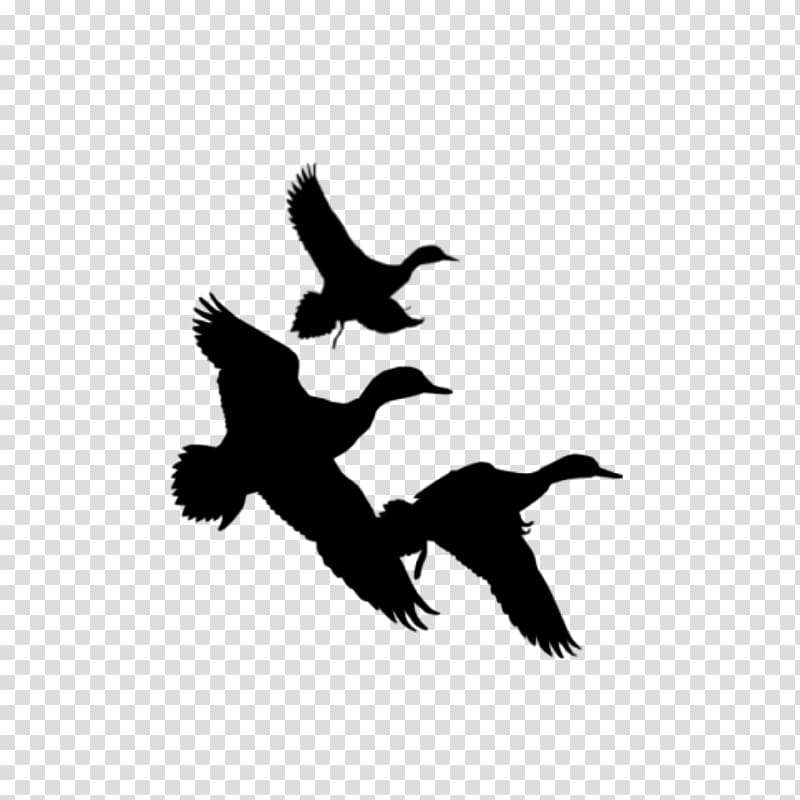 Mallard goose bird silhouette. Hunting clipart duck hunting