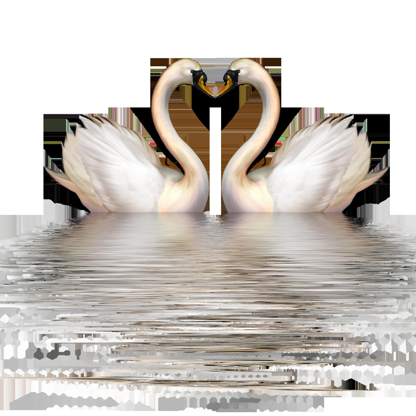 Wing clipart swan. Cygnini goose bird clip