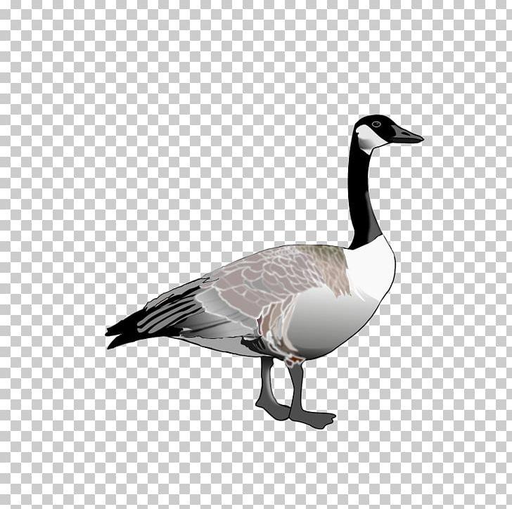 Canada bird png beak. Goose clipart icon canadian