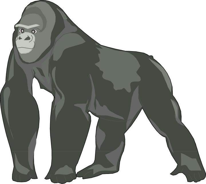 Clip art free panda. Gorilla clipart