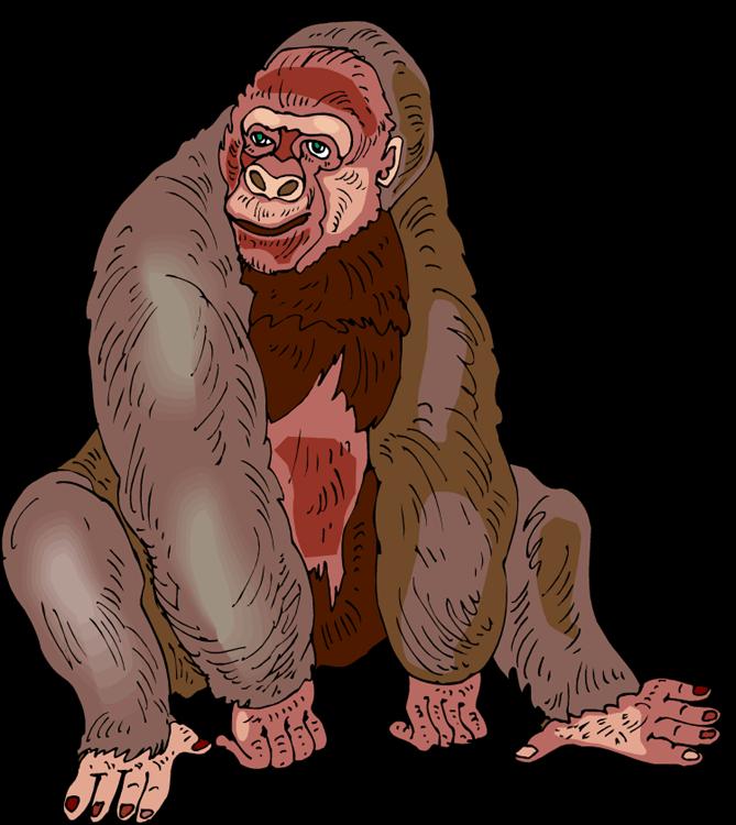 Sitting cliparts free collection. Gorilla clipart zoo gorilla