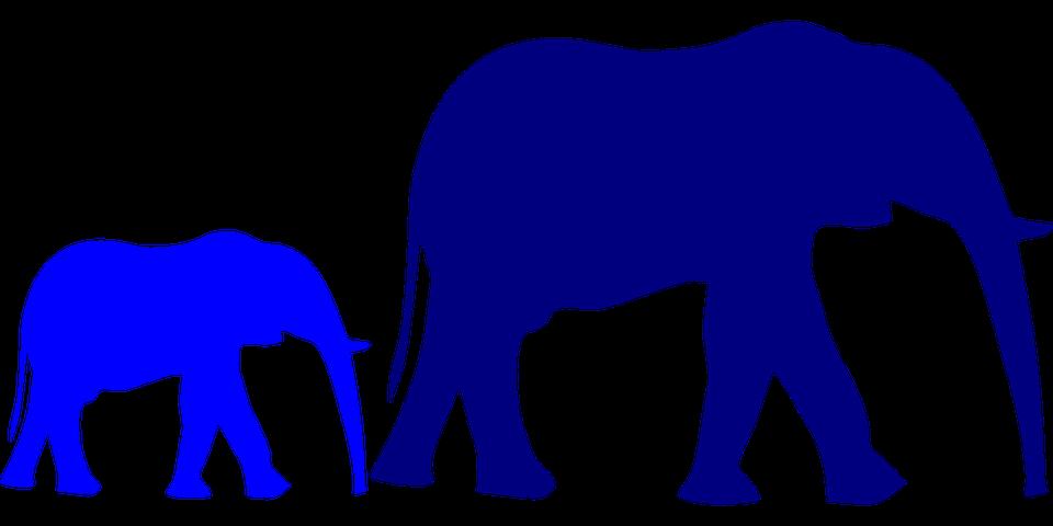 Pin by kathy boudreaux. Graduation clipart elephant