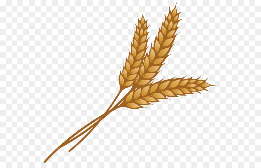 Image result for grain. Grains clipart curved