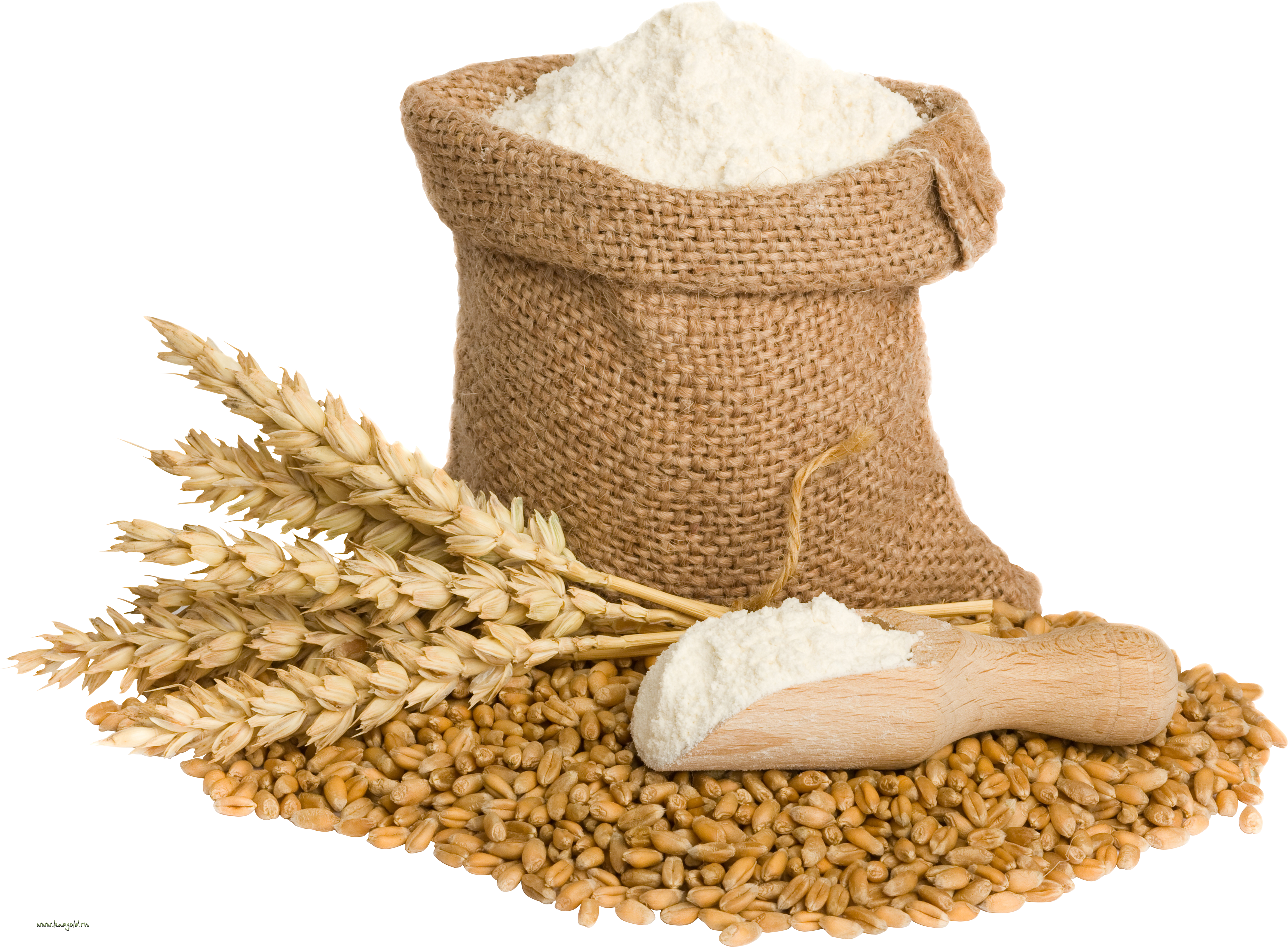 Wheat png image purepng. Grain clipart 5 food