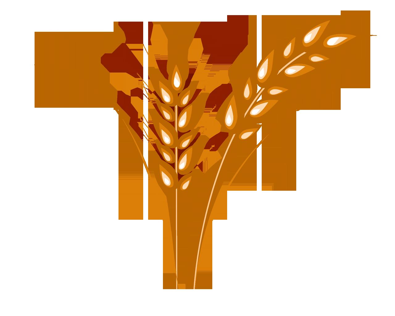 Grain clipart barley. Wheat png image purepng