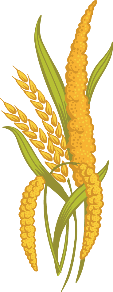 Ancient grains country harvest. Wheat clipart millet plant