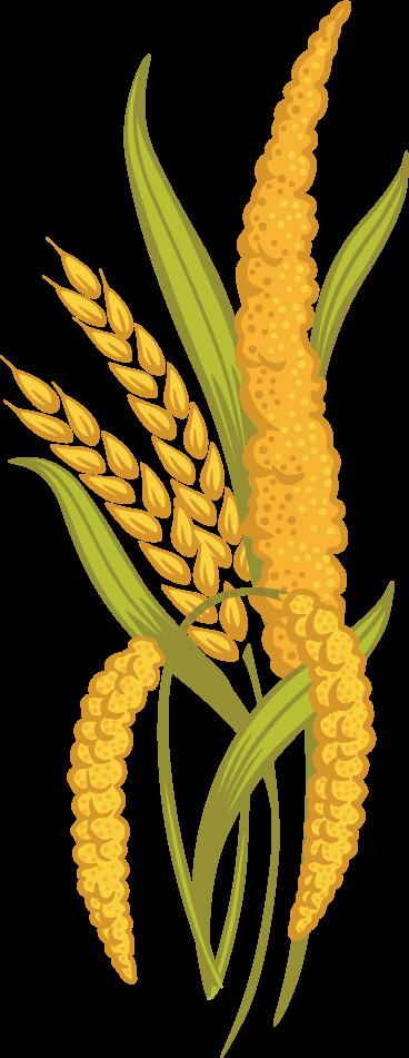 Ancient grains country harvest. Grain clipart barley