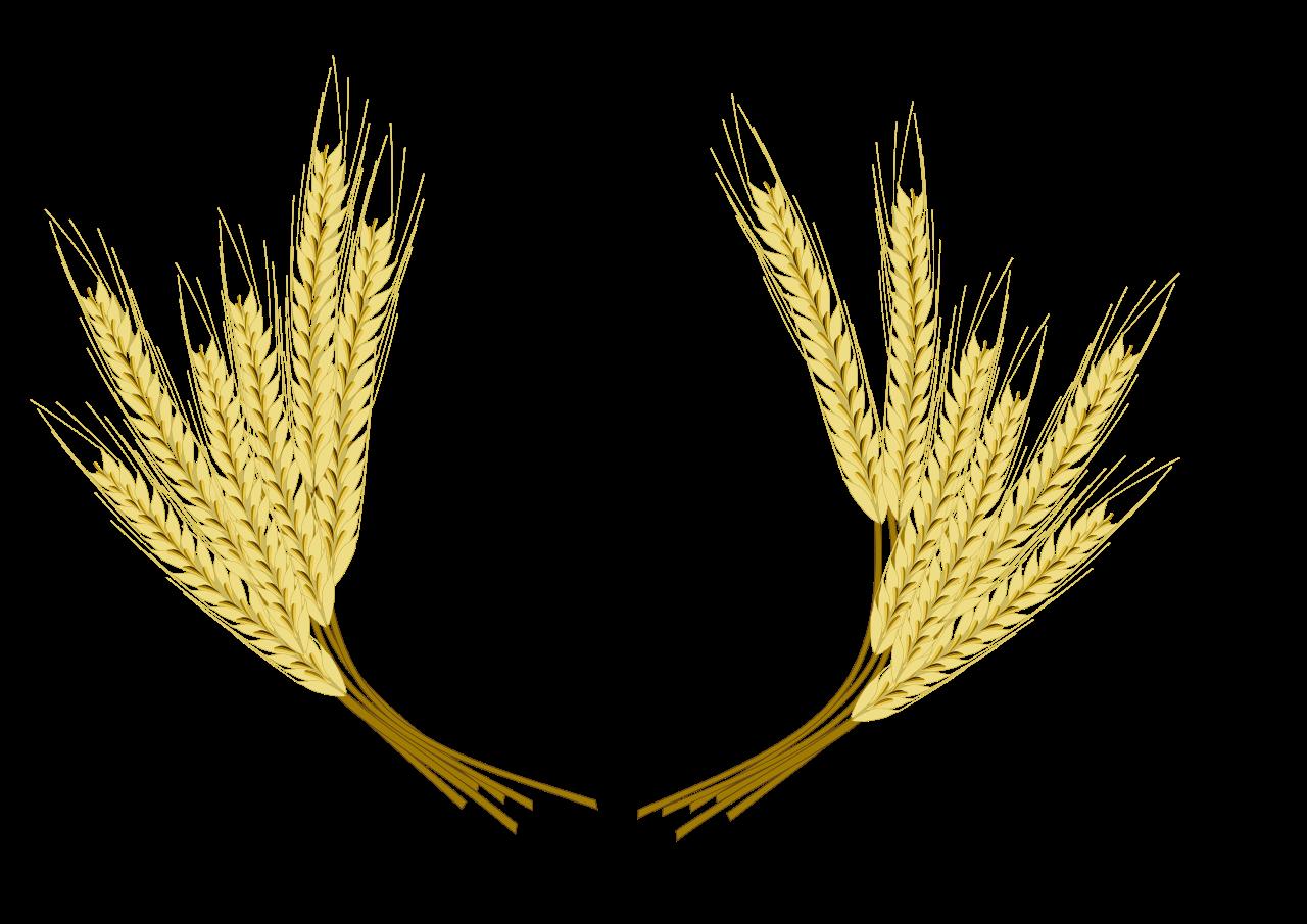 grains clipart barley