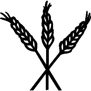 Grain clipart barley. Pix for hops and