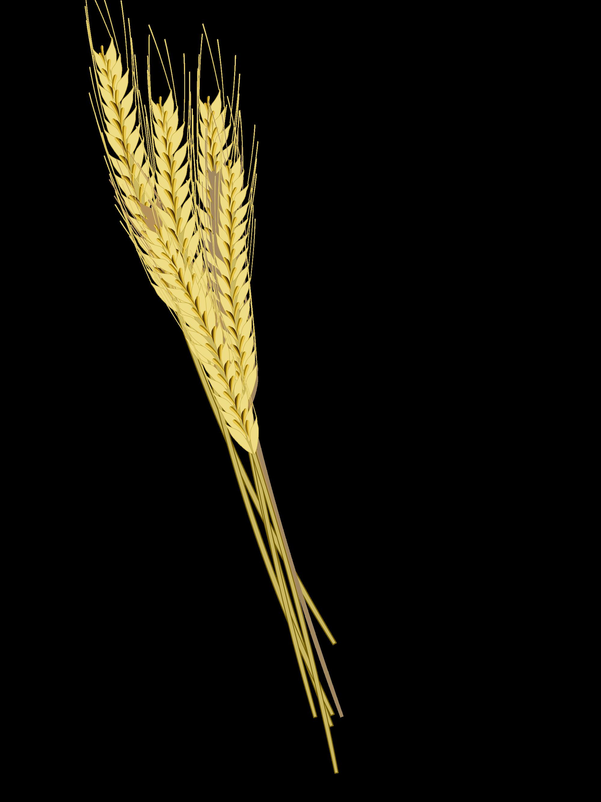 Grain clipart barley. Download png photos free
