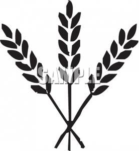 Grains black and white. Wheat clipart wheat head
