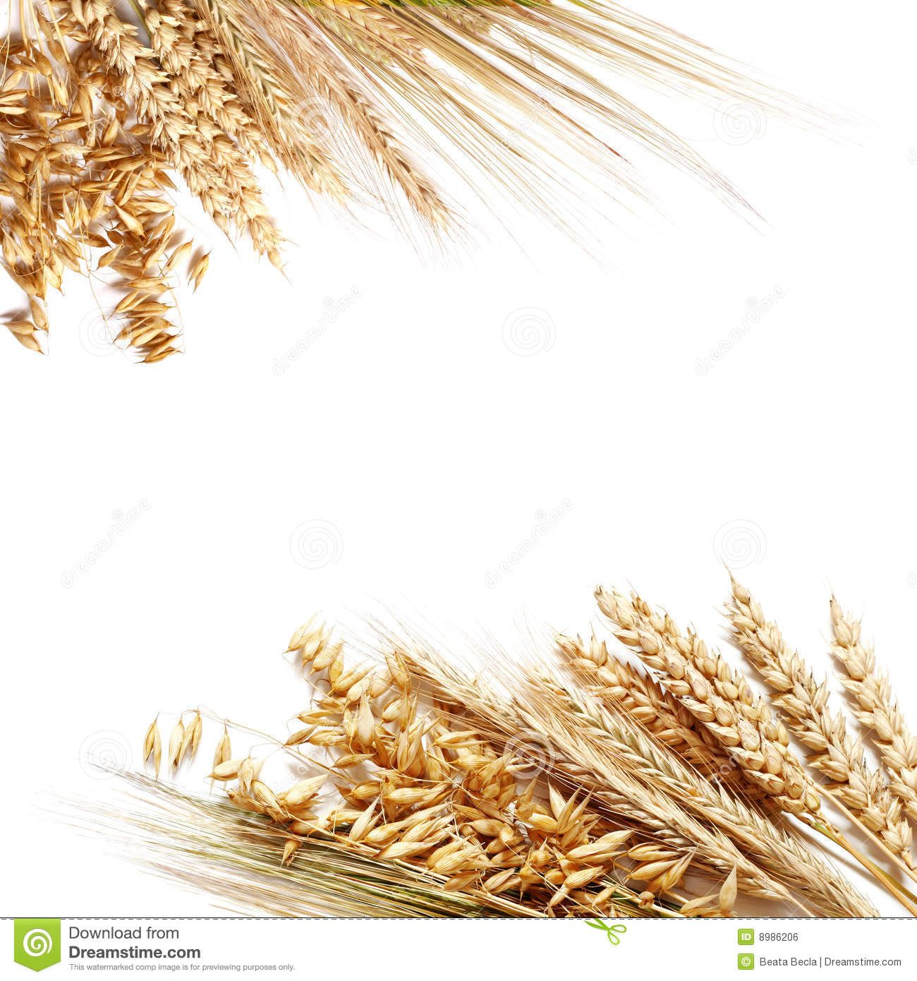 Wheat clipart wheat stock. Border clip art projects