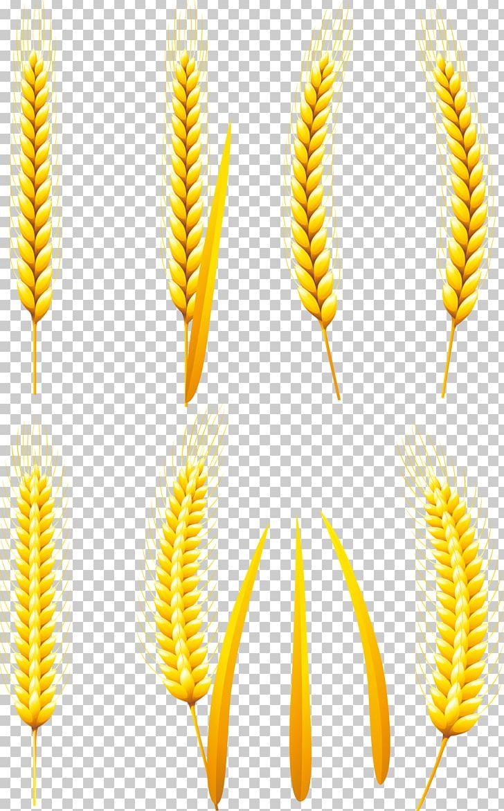 Wheat bread whole flour. Grain clipart common