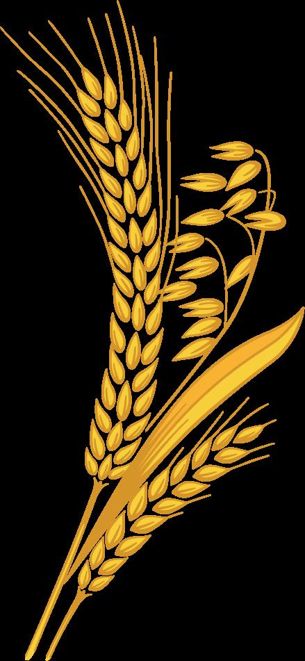 Grain clipart dietary fiber. Free on dumielauxepices net