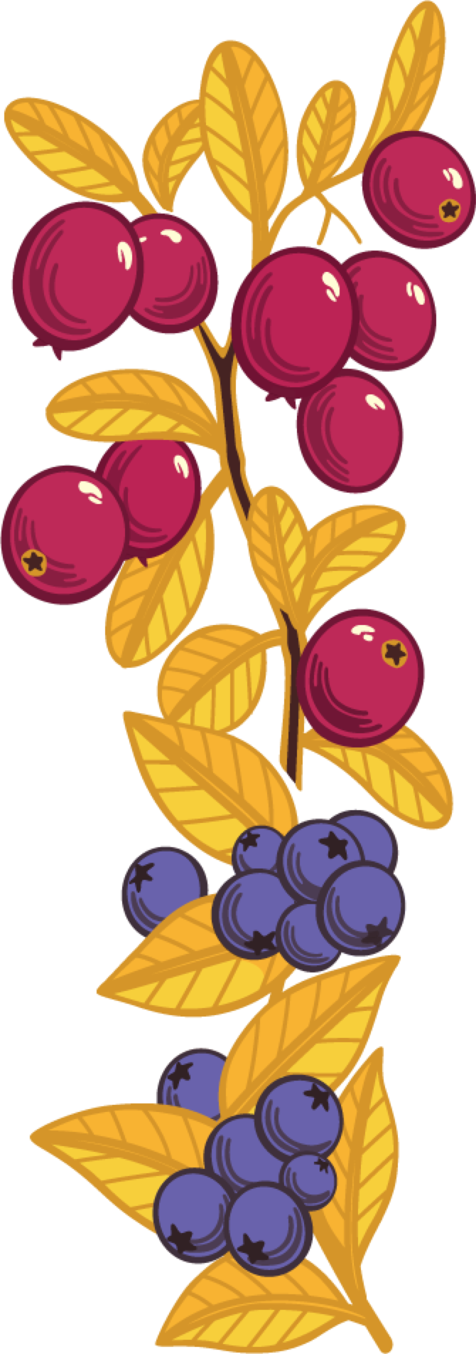 Fruits grains country harvest. Grain clipart dry fruit