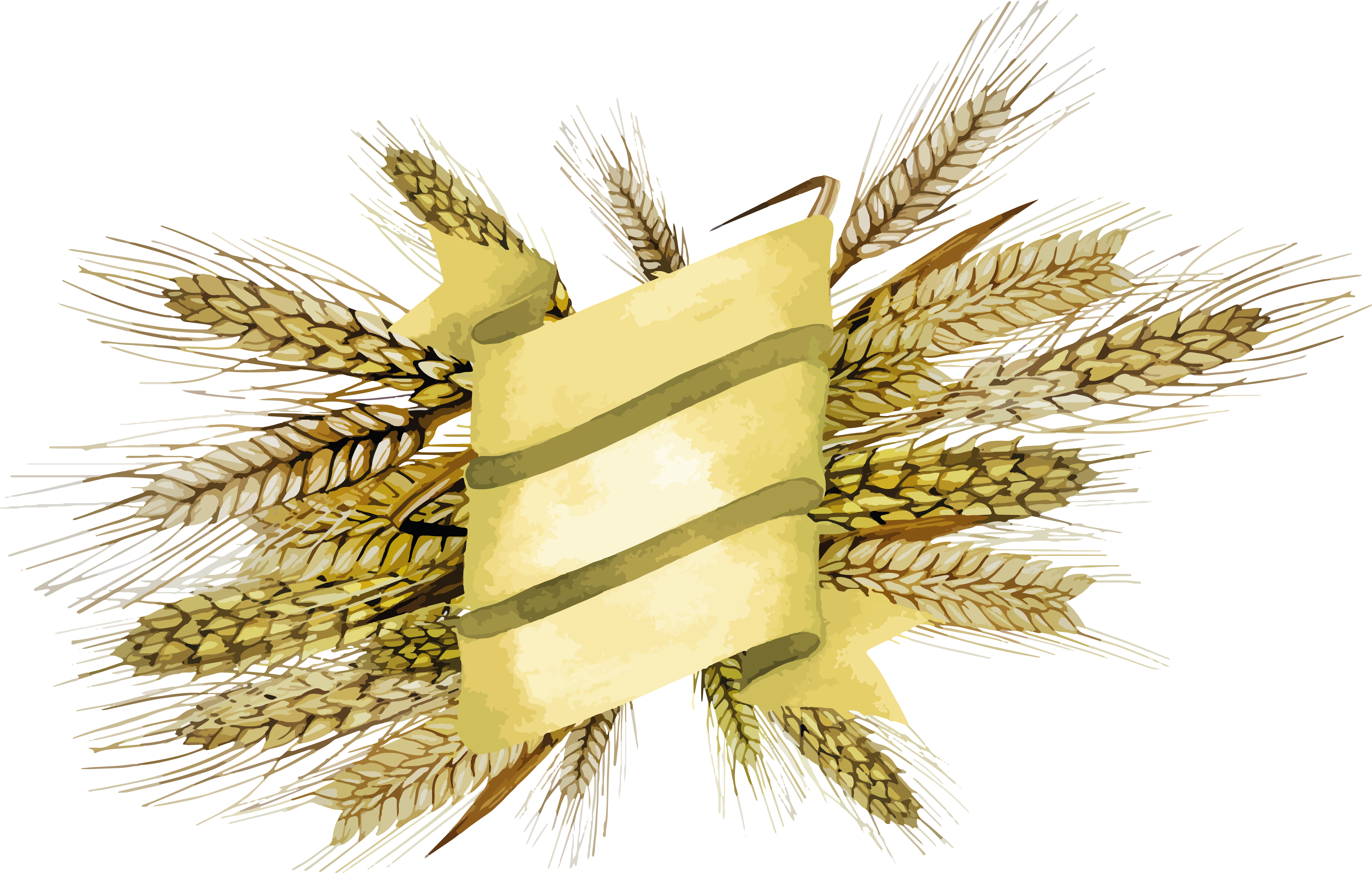 Png images free download. Wheat clipart feather