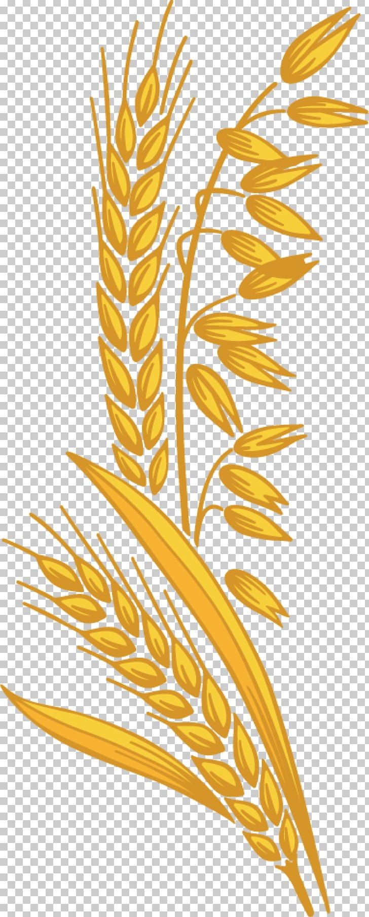 Dietary cereal germ sugar. Grain clipart fiber