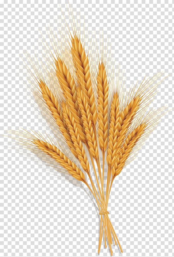 grains clipart common