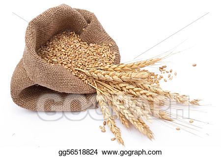Stock illustrations the scattered. Grain clipart grain bag