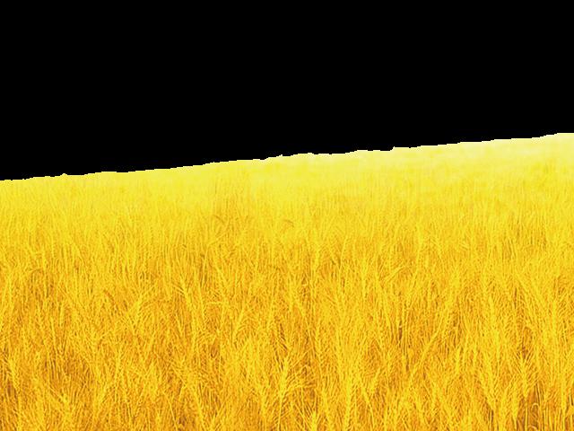 Grain clipart harvest field. Grains x free clip