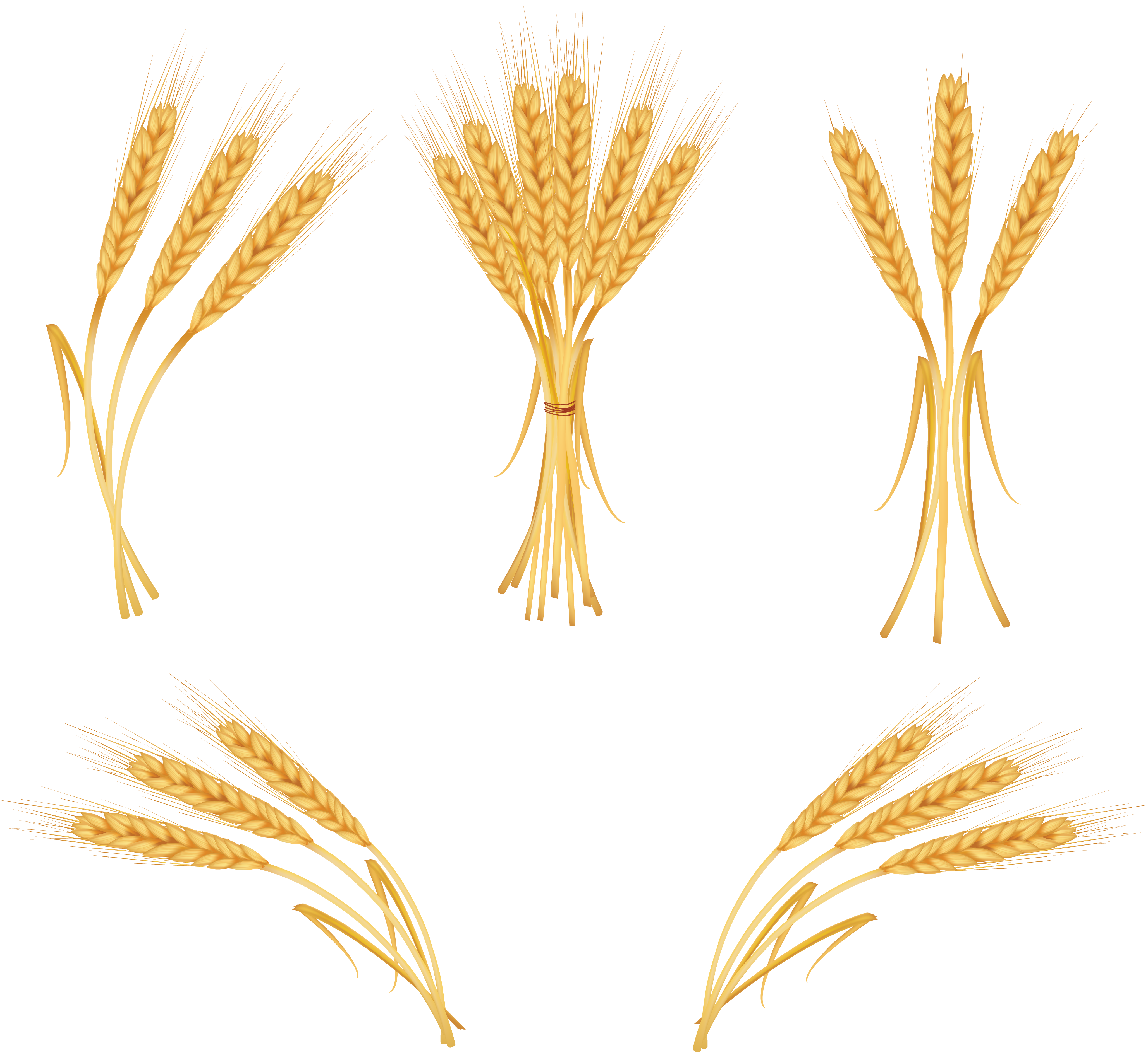 Wheat png images free. Grain clipart high fiber diet