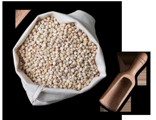 Hello paratha millet parathas. Grain clipart jowar