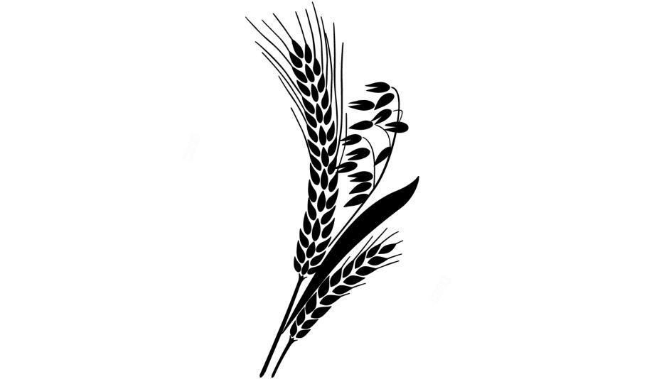 Transparent png image . Grain clipart malt