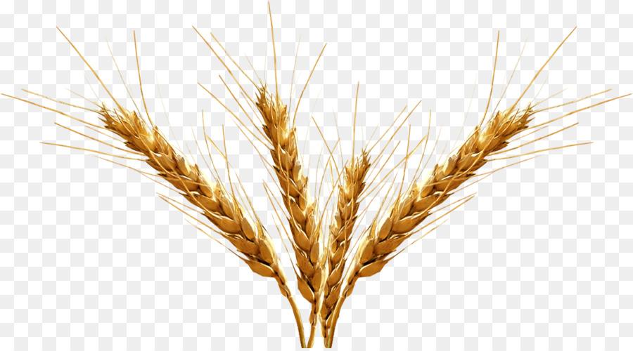 Wheat cartoon beer grass. Grain clipart malt