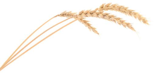 Grain clipart malt. Free wheat bunch download