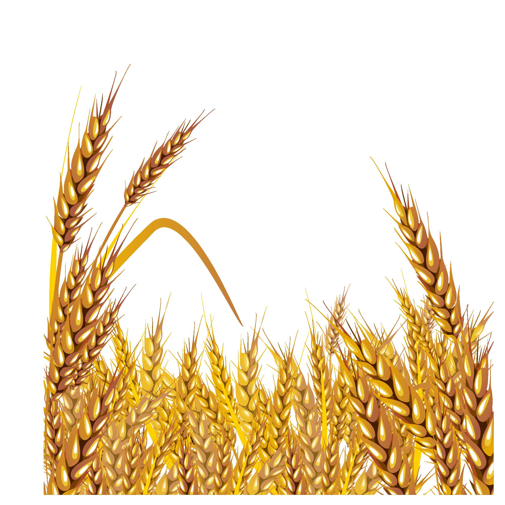 Grain clipart malt. Free on dumielauxepices net
