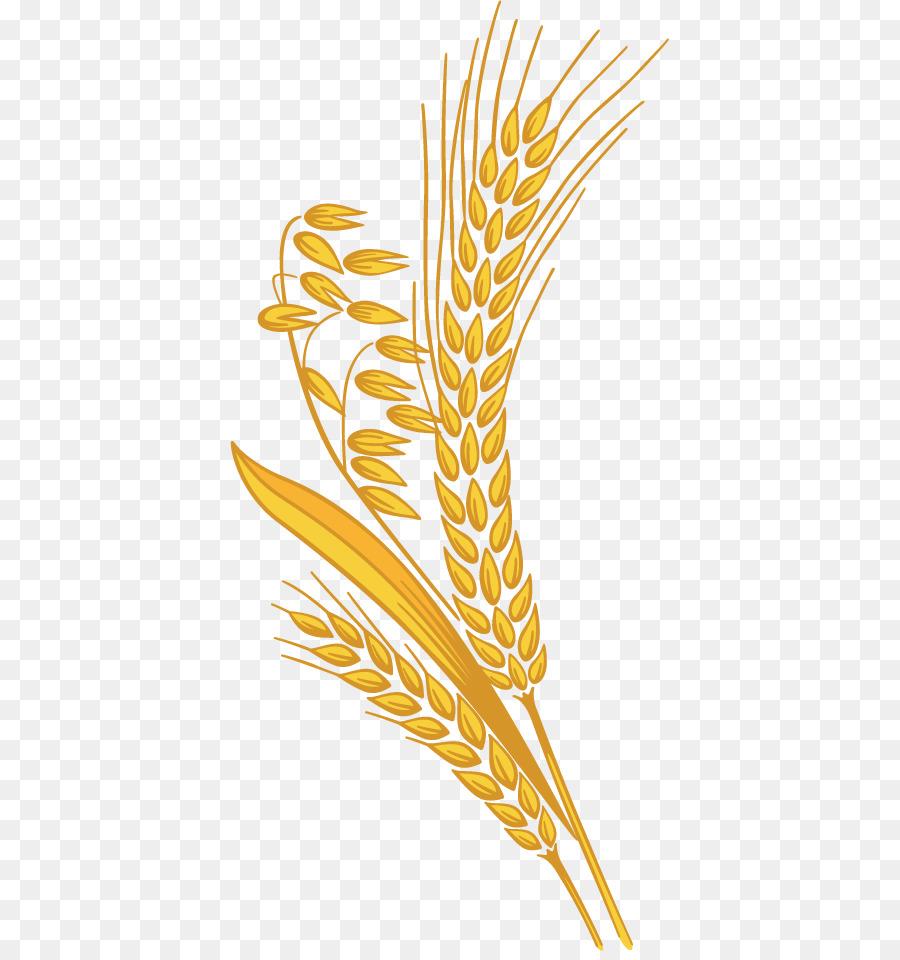 Grain clipart millet. Download free png clip